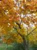 Fall 2013 Leaves