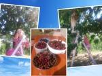 2018.06. Cherries collage